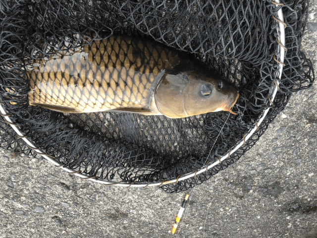 釣り堀レビュー 初心者でも安心。市ヶ谷フィッシュセンターを体験
